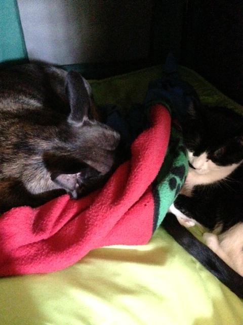 mayzie cuddle