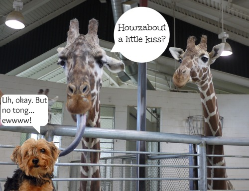 pip giraffes